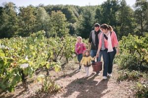 Pays d'art et d'histoire et Musée du vignoble nantais, Vendanges en famille, © David Gallard